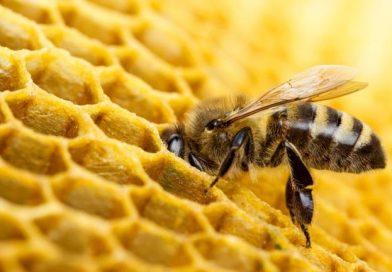 Първите ми стъпки в пчеларския занаят